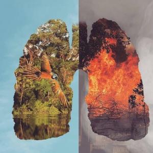 アマゾン大規模火災に声を上げた海外セレブ達!私たちも考えたい自然環境のこと